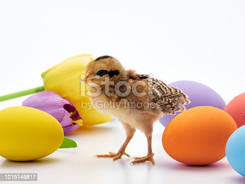 922661892 istock photo Chicks with easter eggs and yellow tulips on white background. 1215146817