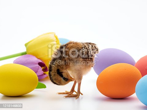 922661892 istock photo Chicks with easter eggs and yellow tulips on white background. 1215146833