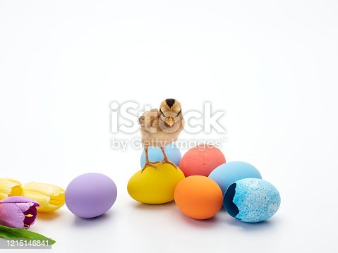 922661892 istock photo Chicks with easter eggs and yellow tulips on white background. 1215146841