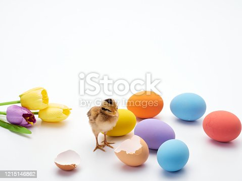 922661892 istock photo Chicks with easter eggs and yellow tulips on white background. 1215146862
