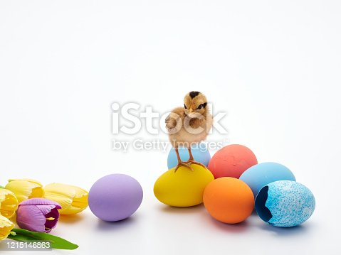 922661892 istock photo Chicks with easter eggs and yellow tulips on white background. 1215146863