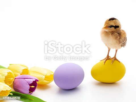 922661892 istock photo Chicks with easter eggs and yellow tulips on white background. 1215146878