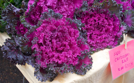 Chidori Kale Stock Photo More Pictures Of Agricultural Fair Istock
