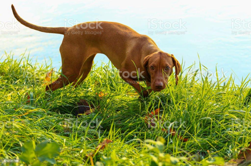 chien au bord de la rivièrer - Photo