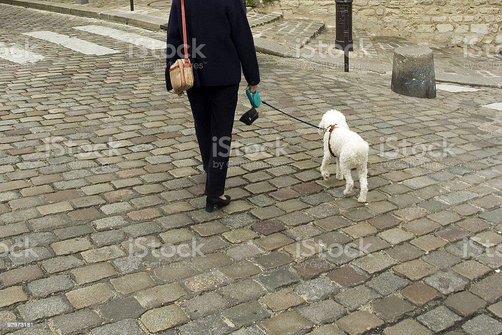 Chien De Paris stock photo