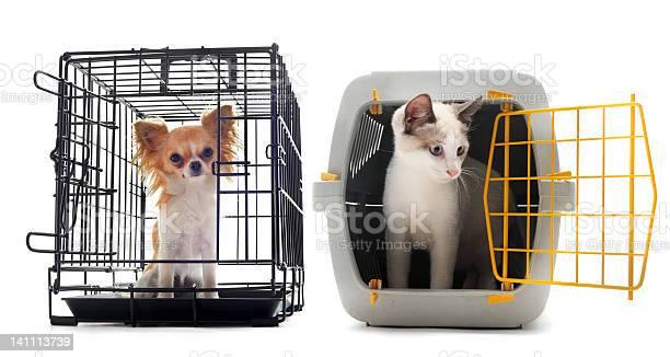 Chihuahua and cat in kennel picture id141113739?b=1&k=6&m=141113739&s=612x612&h=qs 77ywhj1 ahiqr  6ii3 qgvxb1uhdnzejcjagzkm=