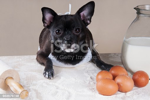 istock Chihuahua cooking 933579738