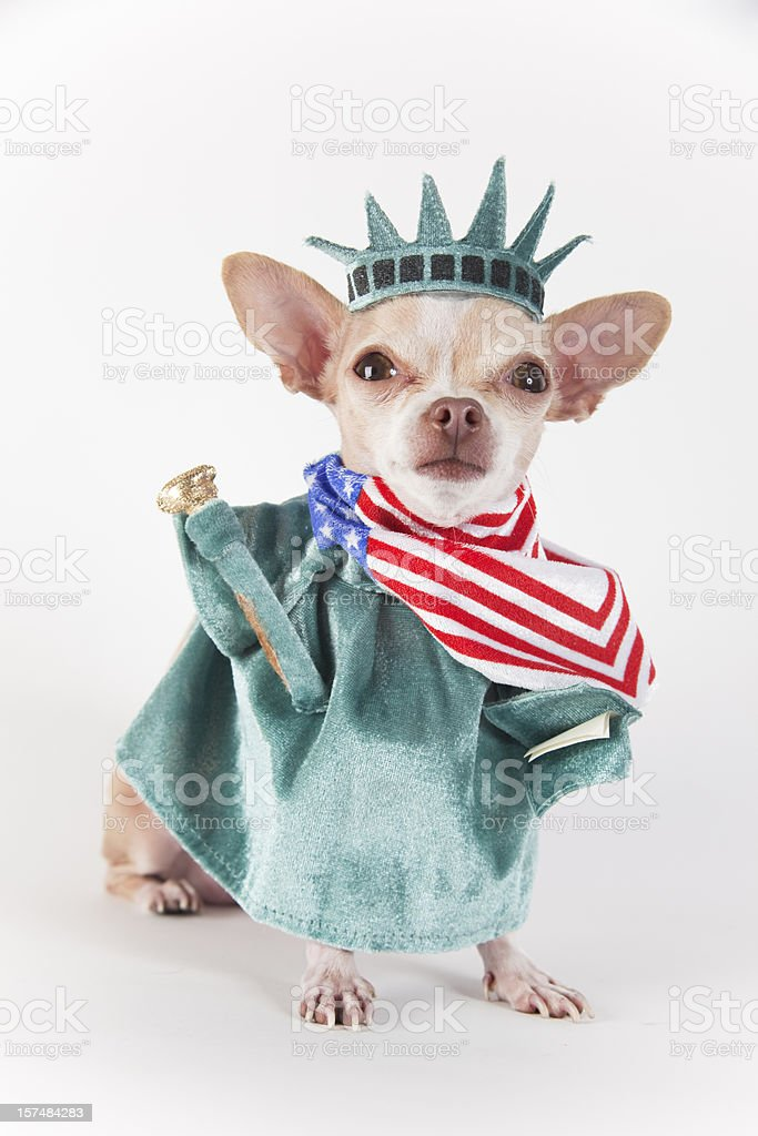 Chihuahua dog dressed up as the Statue of Liberty stock photo