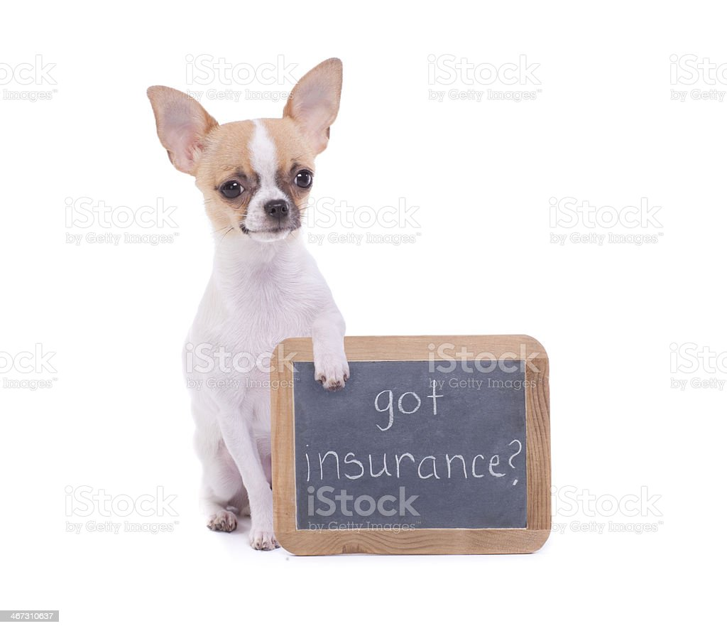 Chihuahua holding a Chalk Board with Message stock photo