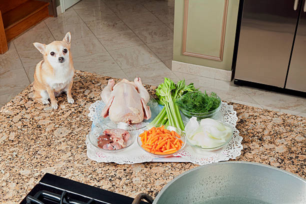 Chihuahua sitting next to raw chicken and vegetables. Know which foods are bad for your dog. Dog proofing the kitchen.