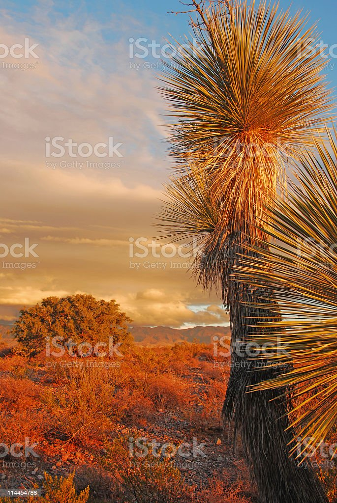 Chihuahuan Desert Scene After a Rainstorm (Vertical) royalty-free stock photo
