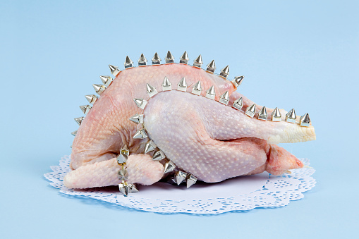playful mashup using a chicken and punk spikes on a blue background. Minimal color still life and quirky photography
