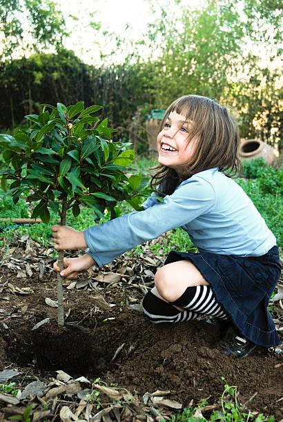 Chil planting tree stock photo