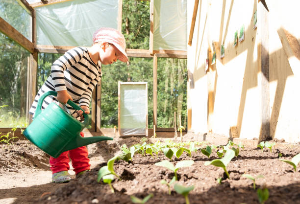 A child, a girl in a vegetable greenhouse watering sprouts from a green watering can. Teaching children pipe. Growing vegetables in the greenhouse. The child is watering the sprouts of vegetables from the watering can. A child learn to work. russian dacha stock pictures, royalty-free photos & images