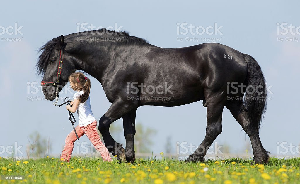 Child and big black horse walking in pasture. stock photo