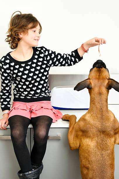 Child and dog stock photo
