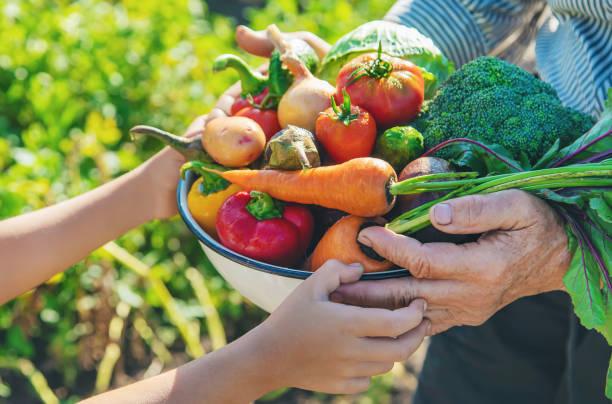 kind en grootmoeder in de tuin met groenten in hun handen. selectieve focus. - rijp voedselbereiding stockfoto's en -beelden