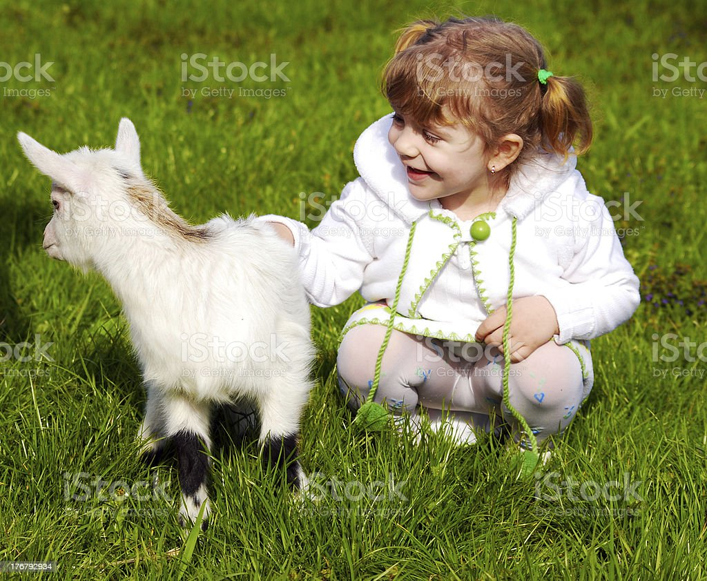 child and little goat stock photo