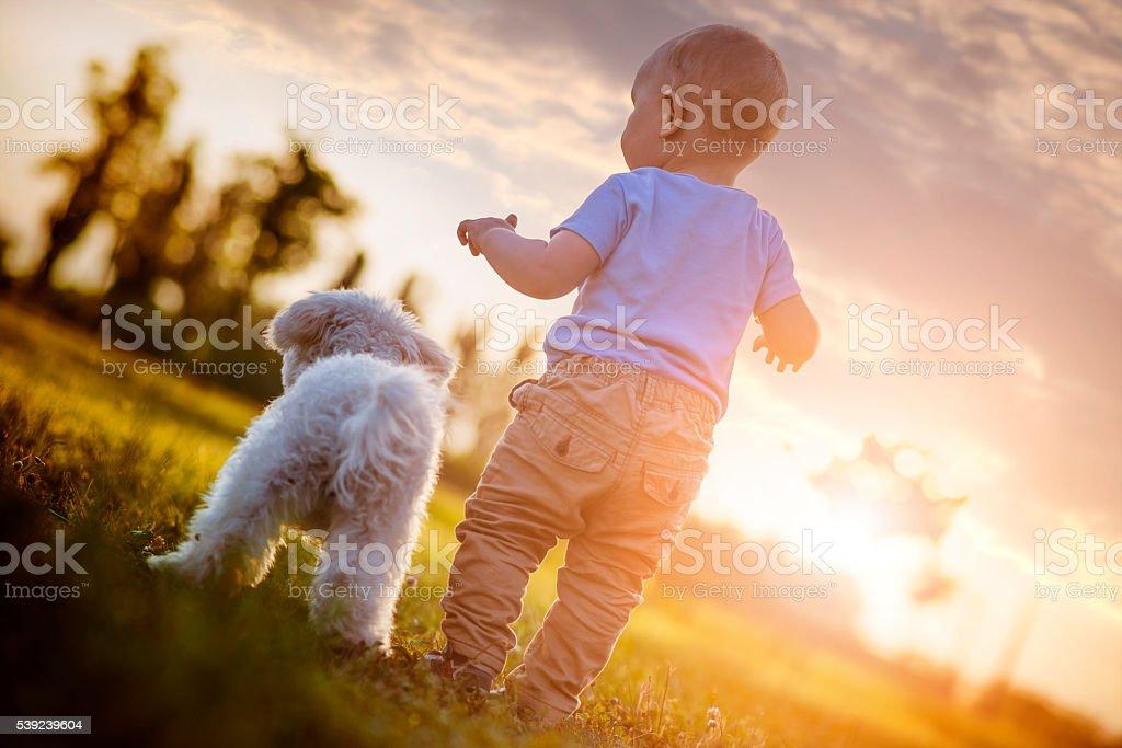 Niño y cachorro foto de stock libre de derechos