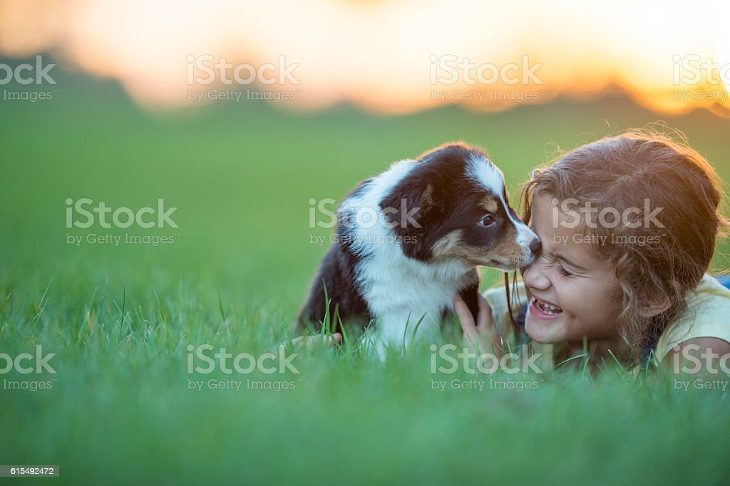 Child and Puppy A girl plays with her puppy in a field at sunset during the summer. She smiles while holding the dog. Agricultural Field Stock Photo