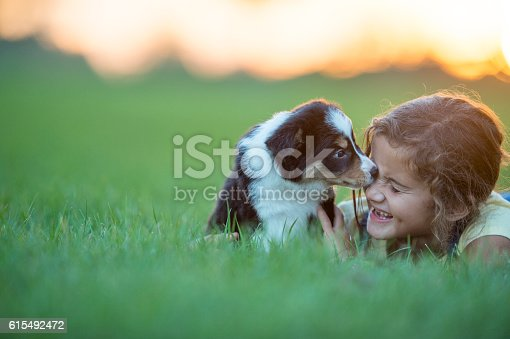 A girl plays with her puppy in a field at sunset during the summer. She smiles while holding the dog.