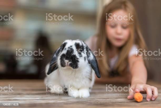 Child and rabbit picture id1063811628?b=1&k=6&m=1063811628&s=612x612&h=shug4hjju5ep99z6p9wjylwa7xqrxsrsjux3qcddxl4=