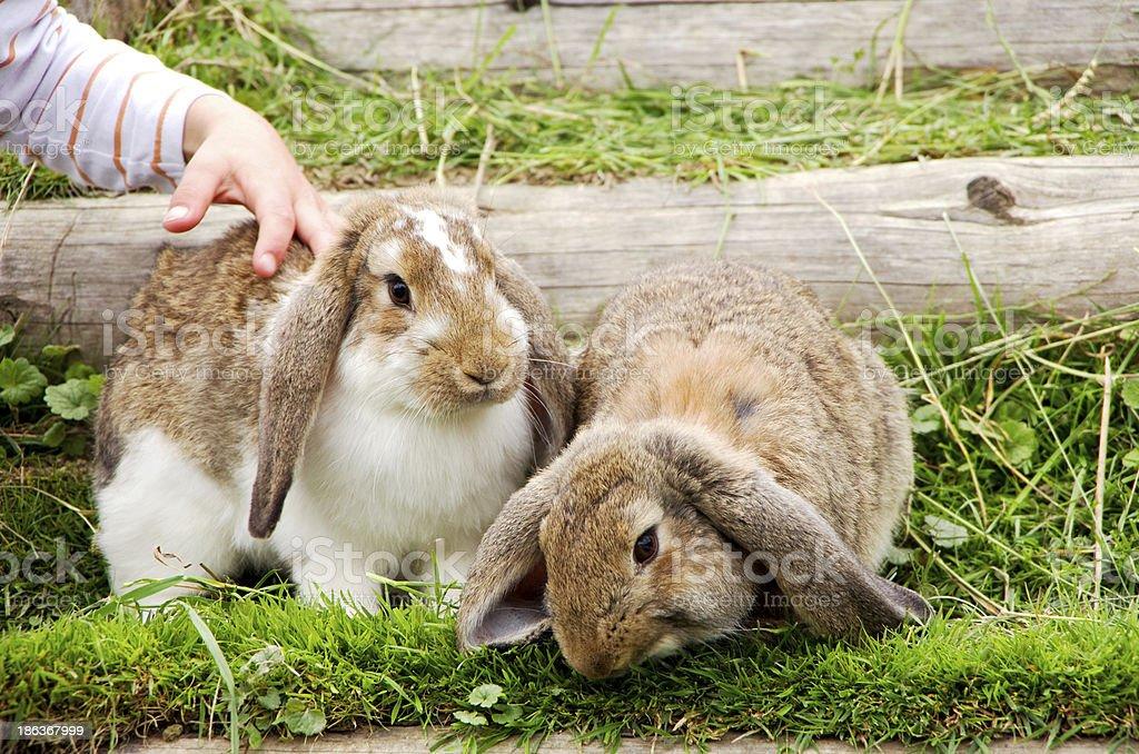 child and rabbits stock photo