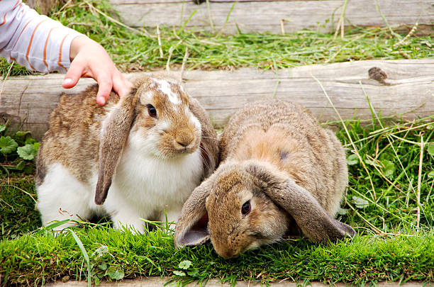 child and rabbits stock photo