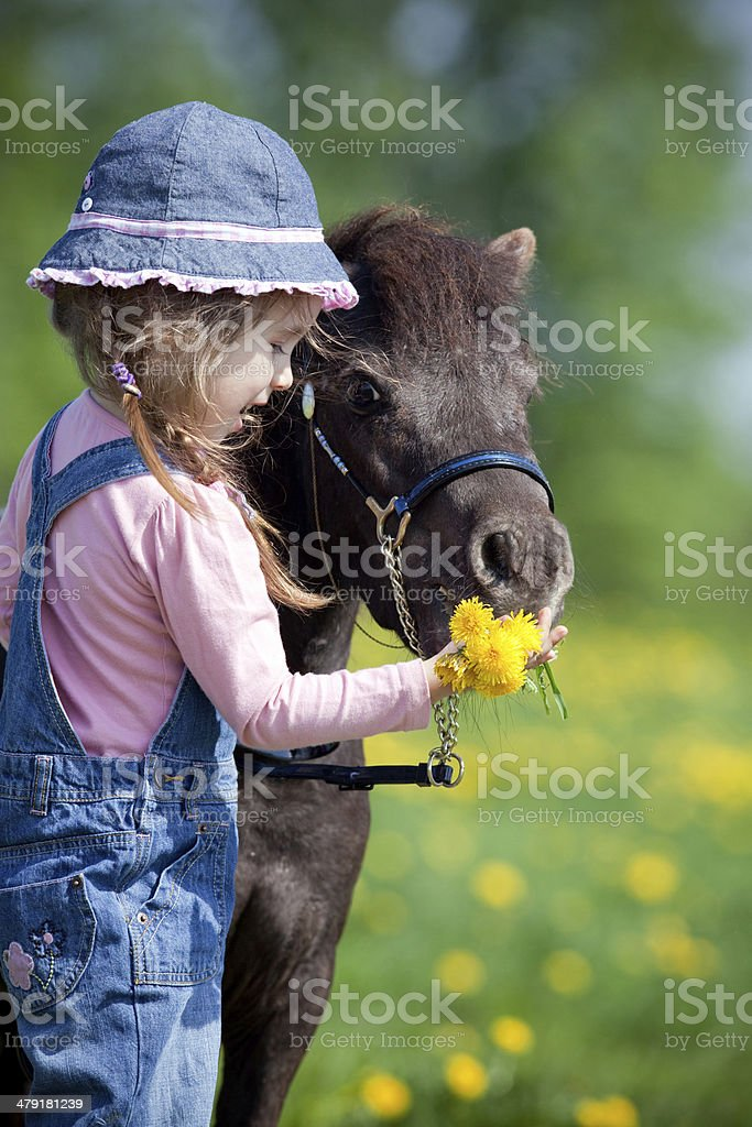 Child and small horse in field in spring stock photo