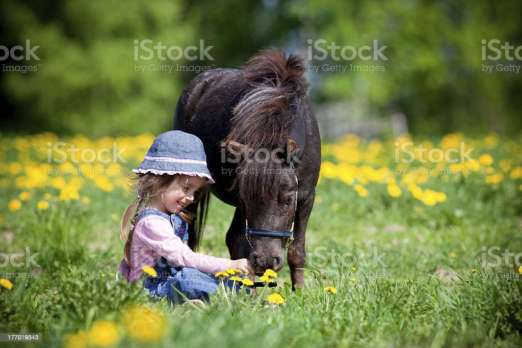Child and small horse in the field. stock photo