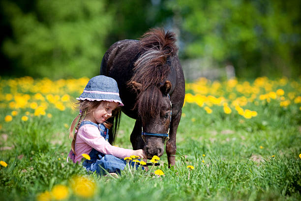 Child and small horse in the field. Child and small horse in the field at spring. foal young animal stock pictures, royalty-free photos & images