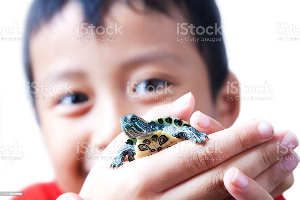 Child and turtle Asian boy showing his baby turtle on his hand 2015 Stock Photo