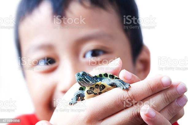 Child And Turtle Stock Photo - Download Image Now