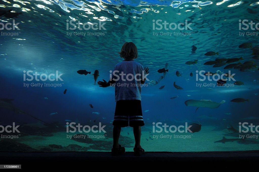 Child at Aquarium stock photo