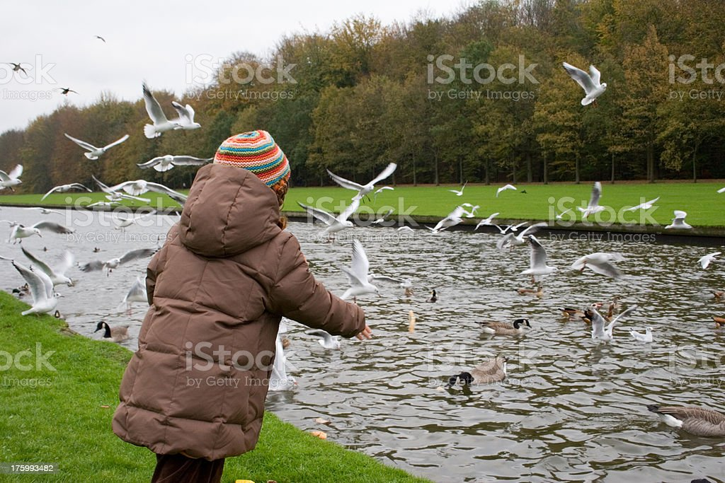 "Child at park, feeding birds and ducks ""Back of a small child, feeding birds in the park. Having lots of success.Location: Tervuren park, Brussels, Belgium."" Activity Stock Photo"