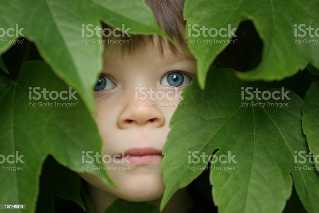 Child between the leaves royalty-free stock photo