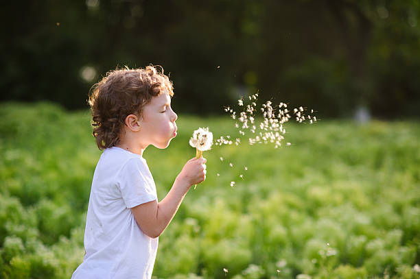 child blowing a dandelion - young singles stock photos and pictures