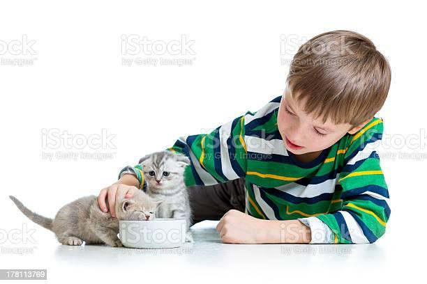 Child boy feeding attractive kittens picture id178113769?b=1&k=6&m=178113769&s=612x612&h=kwxyxgv0uwowwrrwnojxquvwfysj5ux5zoop8rawry8=