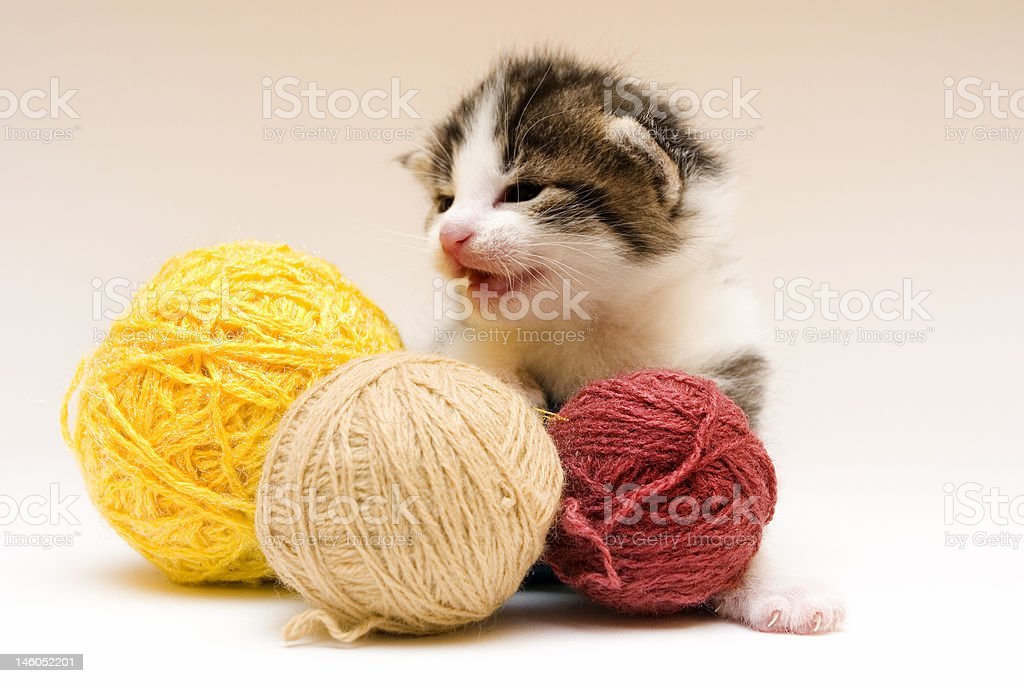 Child cat and thread royalty-free stock photo