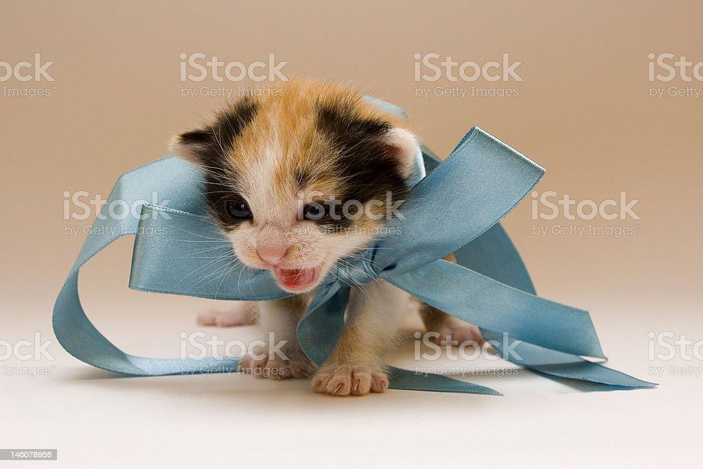 Child cat royalty-free stock photo