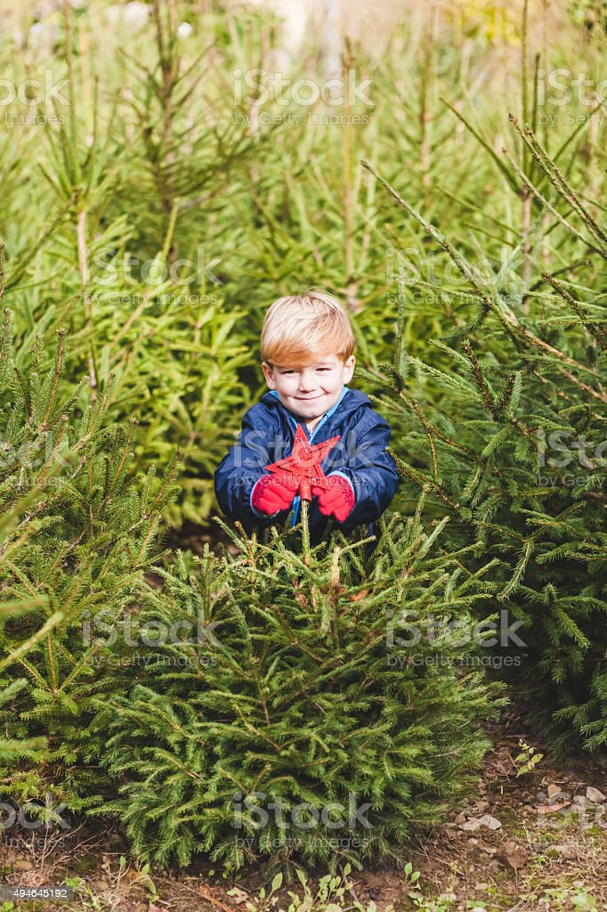 Child Decorating an Outdoors Pine Tree for Christmas stock photo