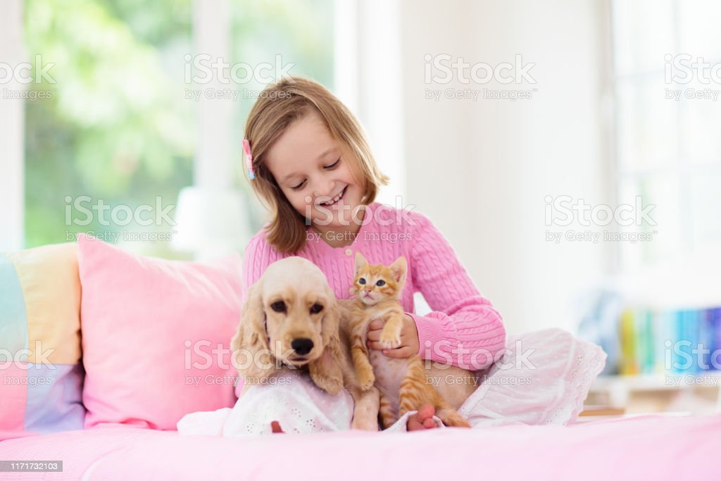 Child Dog And Cat Kids Play With Puppy Kitten Stock Photo Download Image Now Istock
