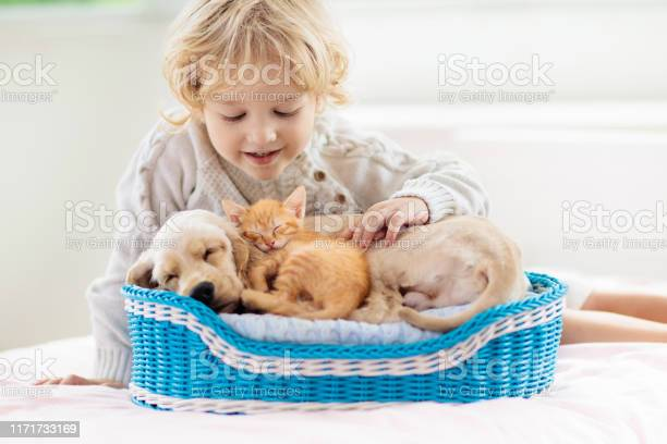 Child dog and cat kids play with puppy kitten picture id1171733169?b=1&k=6&m=1171733169&s=612x612&h=ur n2rm6piiku93ignzy5m8wejr vxl8anvh  xnxn4=