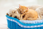 istock Child, dog and cat. Kids play with puppy, kitten. 1171733599