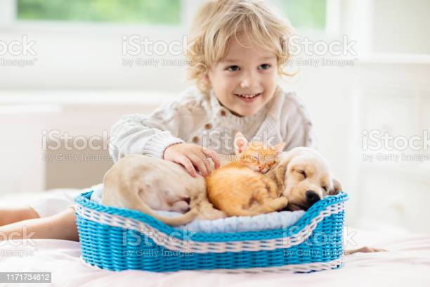 Child dog and cat kids play with puppy kitten picture id1171734612?b=1&k=6&m=1171734612&s=612x612&h=86axl usvwdrlrflrrhvzkm3 y1uuq4zknmapr5vlsm=