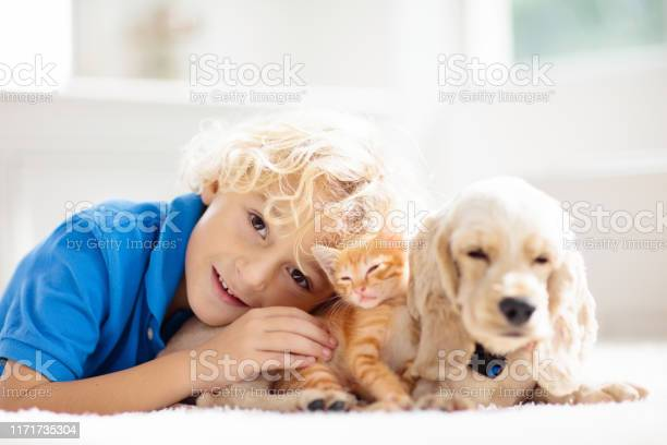 Child dog and cat kids play with puppy kitten picture id1171735304?b=1&k=6&m=1171735304&s=612x612&h=dmigdw8l4 xm sgd7xwajngq7lqbgclkrlr0jbgsqx4=