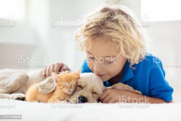 Child dog and cat kids play with puppy kitten picture id1171735345?b=1&k=6&m=1171735345&s=612x612&h=anuvvgr1q8 9qw9bmbeca8biatzkyk14budwf5nq2km=