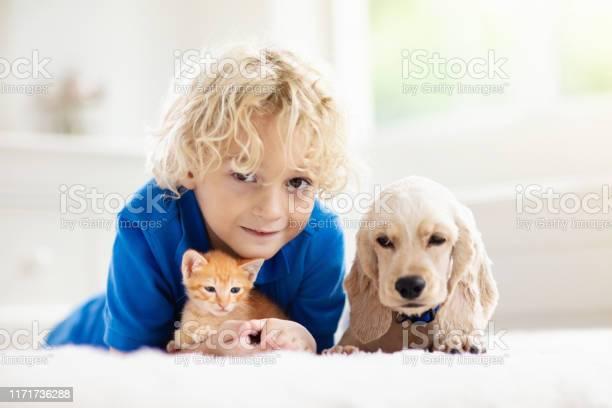 Child dog and cat kids play with puppy kitten picture id1171736288?b=1&k=6&m=1171736288&s=612x612&h=rrwvdziff0ozvgiogtoxfayftmcs29ziwwfyjehd4ri=