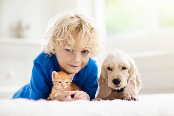 Child dog and cat kids play with puppy kitten picture id1171736288?b=1&k=6&m=1171736288&s=612x612&w=0&h=bmpj 2qcjlxfuq1ygu5ks7zj0vvwnqslrxeigf2abe8=