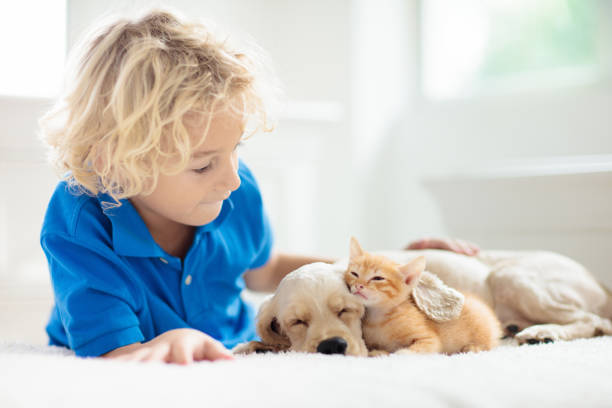 Child dog and cat kids play with puppy kitten picture id1171736813?b=1&k=6&m=1171736813&s=612x612&w=0&h=w9tvpxt28qn9hgxvg51gszegczssb7mhbbvpypjtei8=
